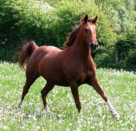 http://ezofit.sk/obrazky/horse-La-Comb-Shemal%5b1%5d.jpg